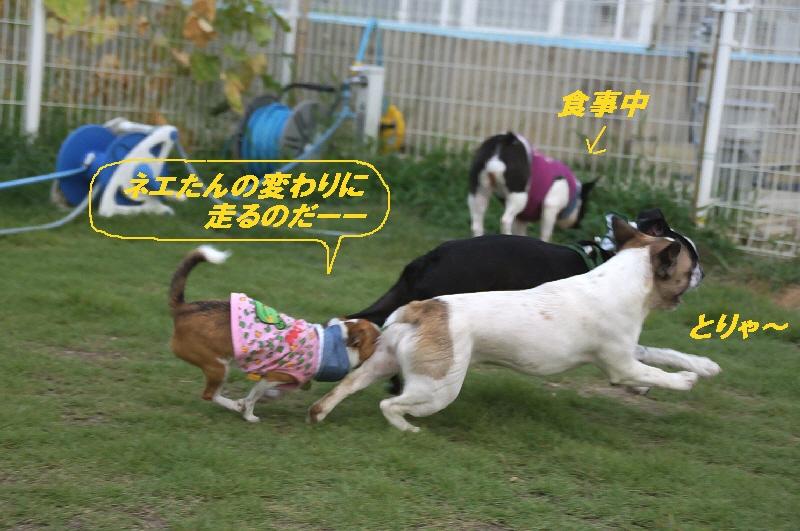 2_20100823220202.jpg