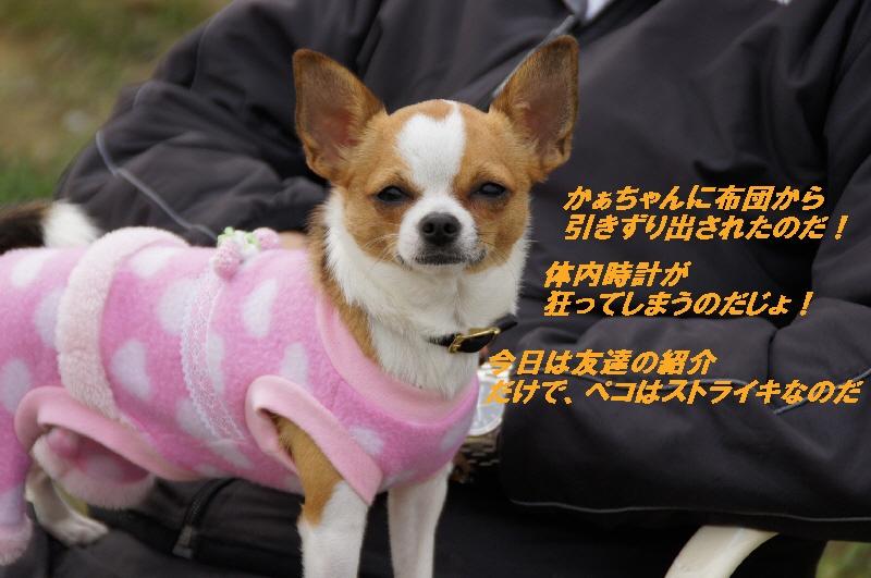 2_20101116120640.jpg