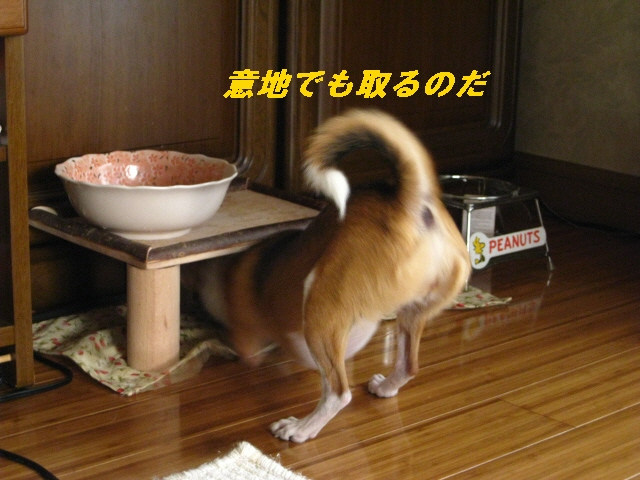 3_20100819113255.jpg
