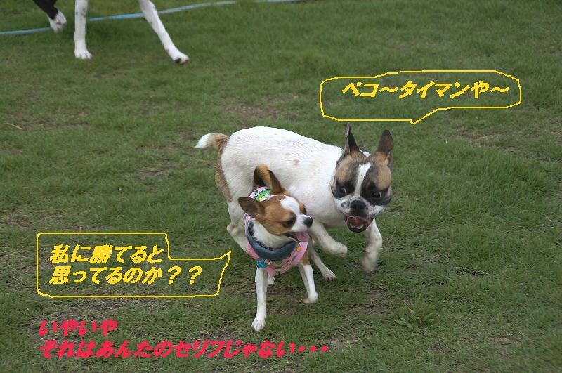 3_20100823220201.jpg