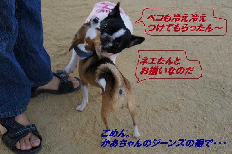3_20100831121739.jpg