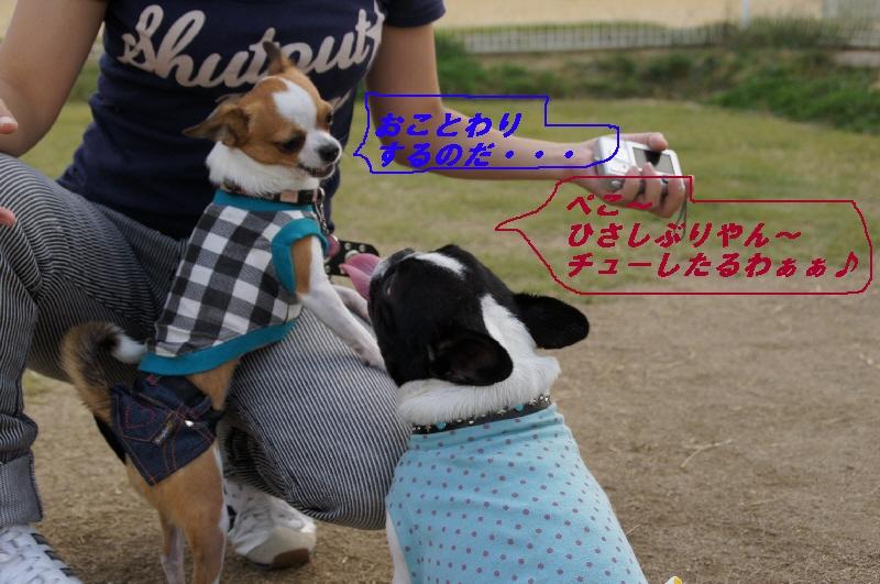 3_20101024210713.jpg