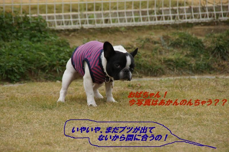 3_20101116120639.jpg