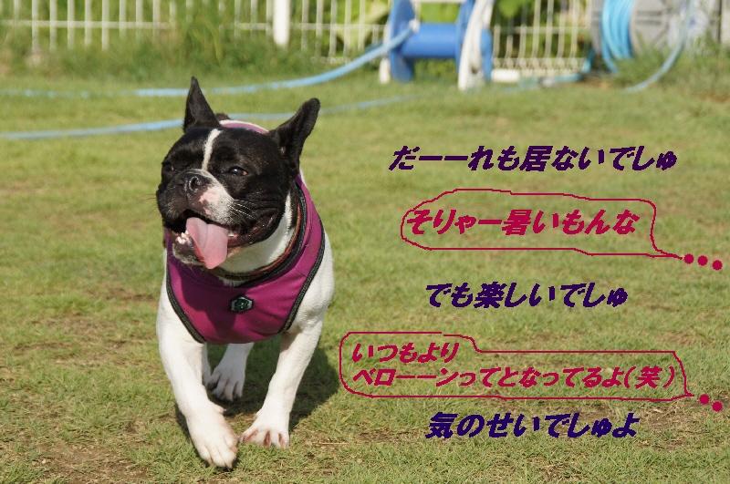 4_20100727170545.jpg
