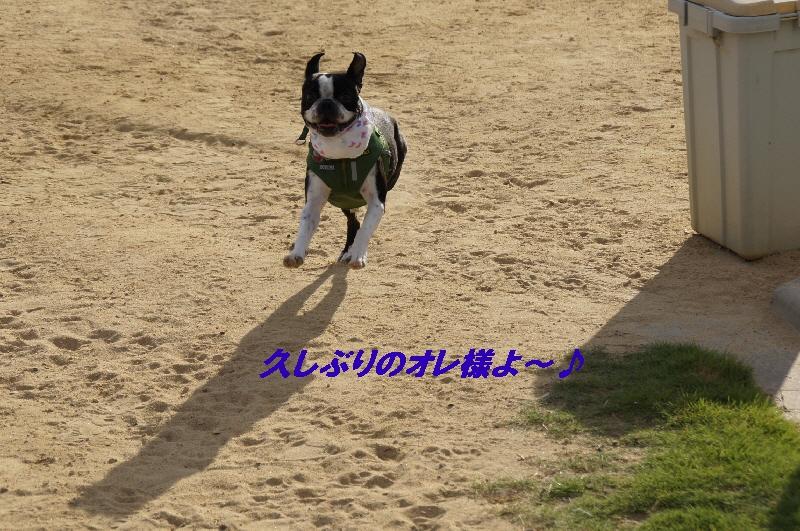 4_20100810220259.jpg