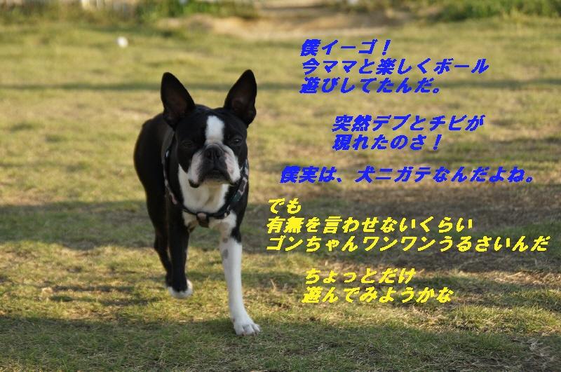 4_20101019211536.jpg