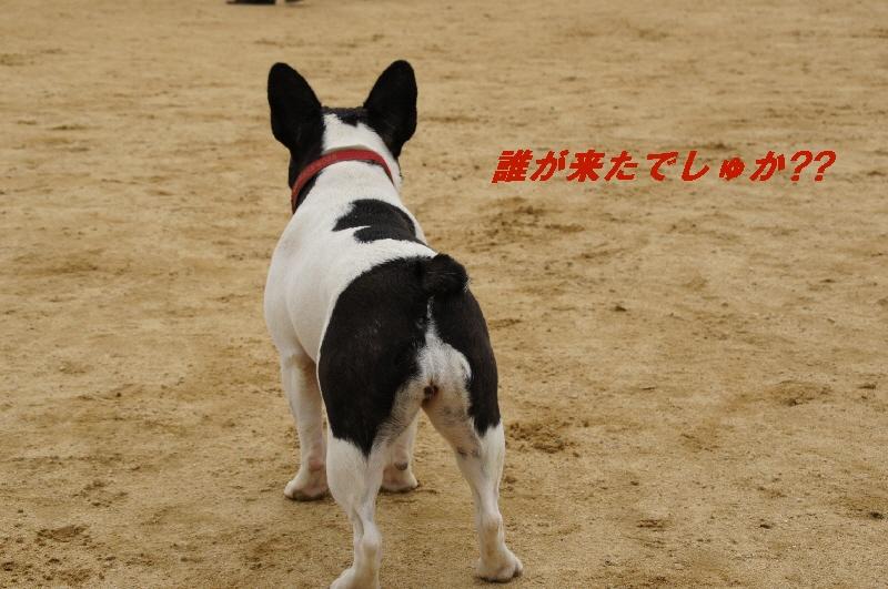 5_20100623205041.jpg