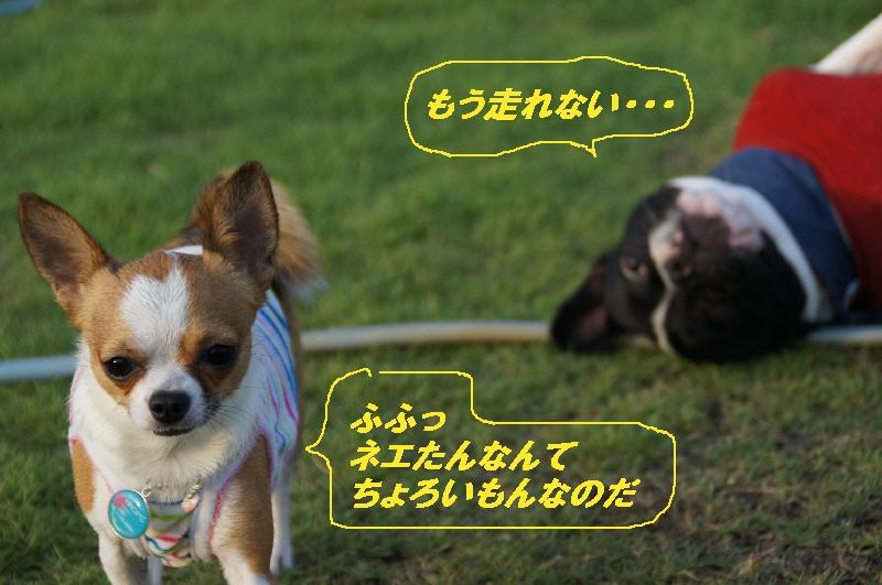 5_20100817215027.jpg