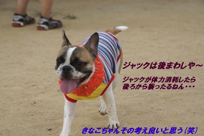 5_20100831121737.jpg