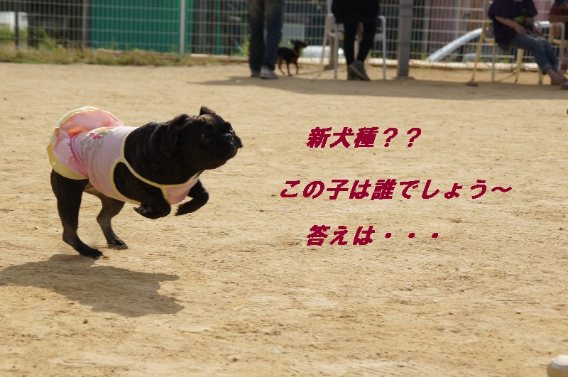 6_20100601200937.jpg