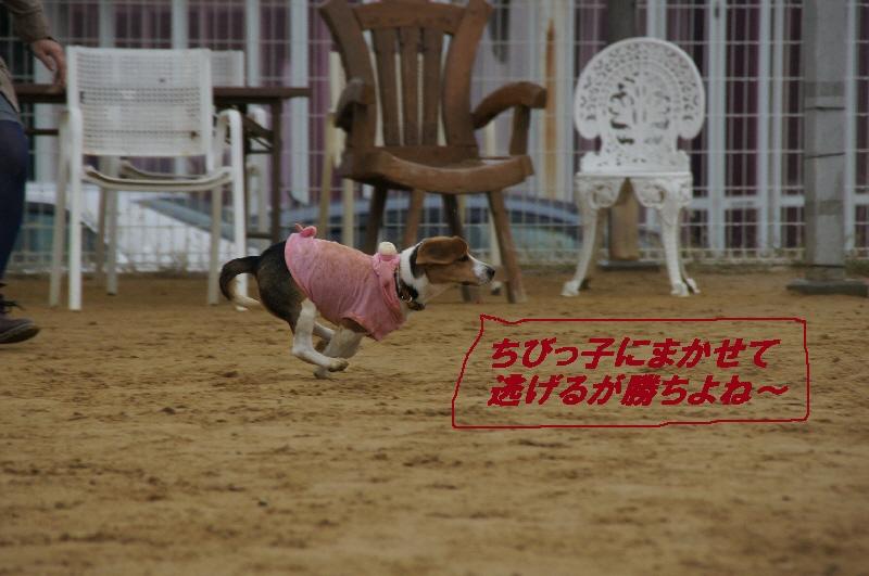 6_20101103082042.jpg