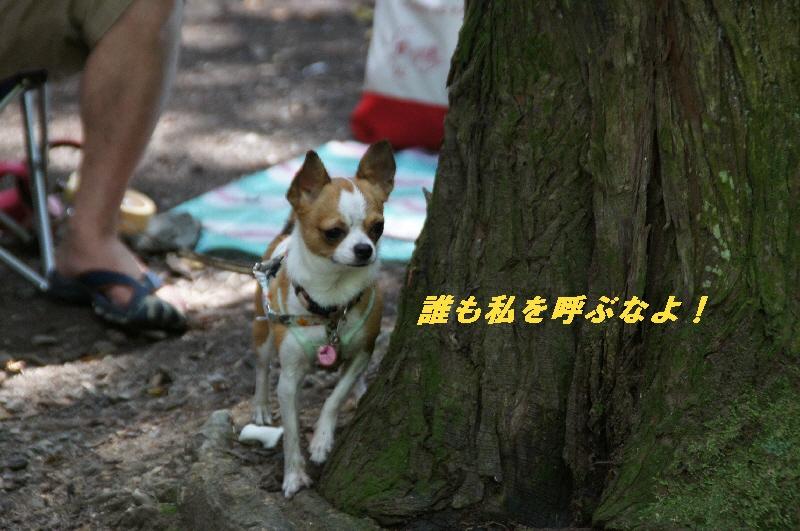 7_20100822064214.jpg
