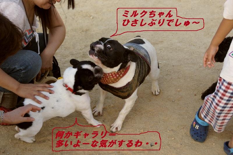7_20100920214053.jpg