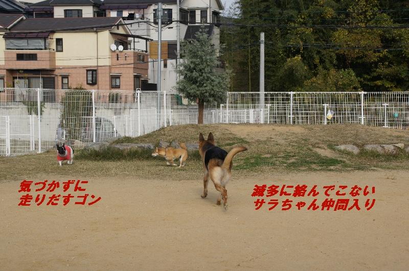 7_20101122225828.jpg