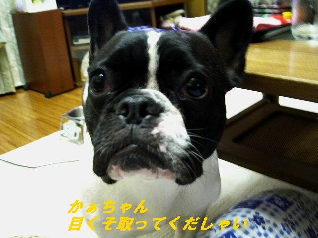 8_20100819113221.jpg