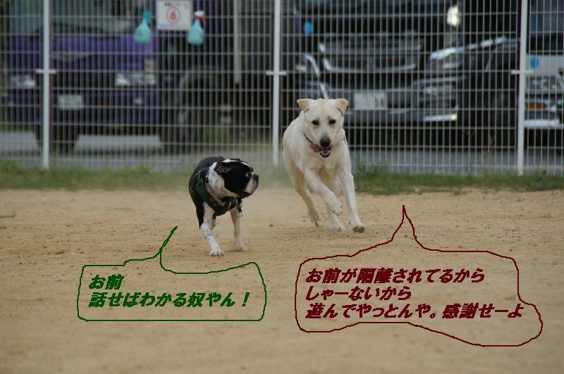 8_20100831121841.jpg