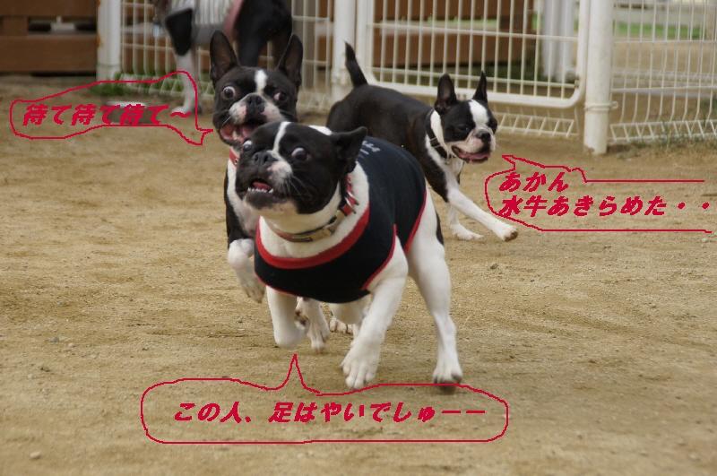 8_20101109185936.jpg