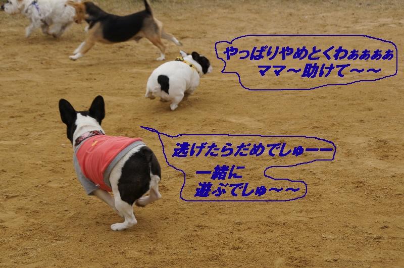 8_20101116121459.jpg