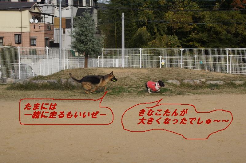 8_20101122225827.jpg