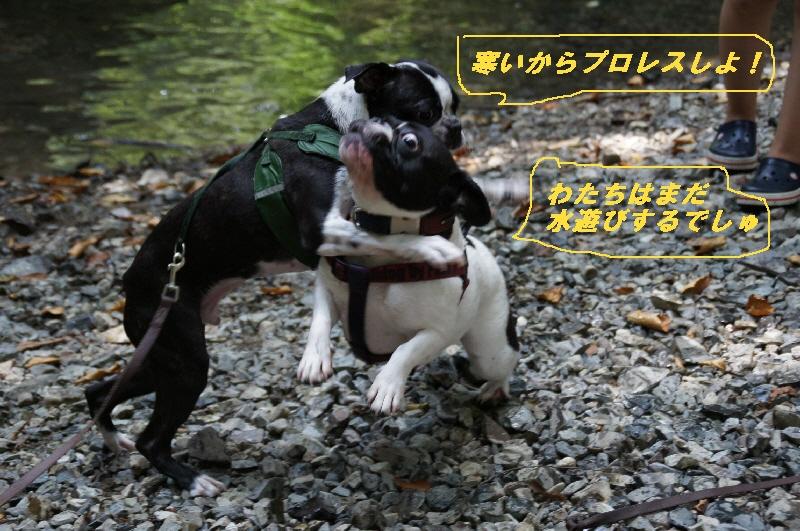 9_20100822064312.jpg