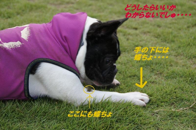 9_20100823220303.jpg