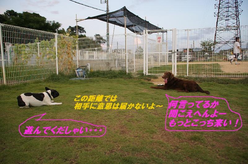 9_20100831121840.jpg