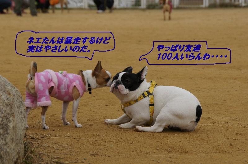 9_20101116121458.jpg