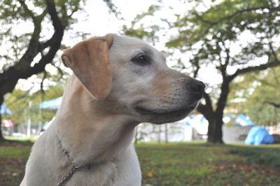 2010.10.15 ウララ