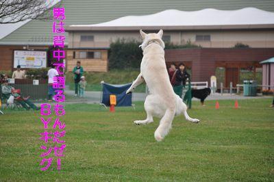 2010.10.17 マザーCUP キング