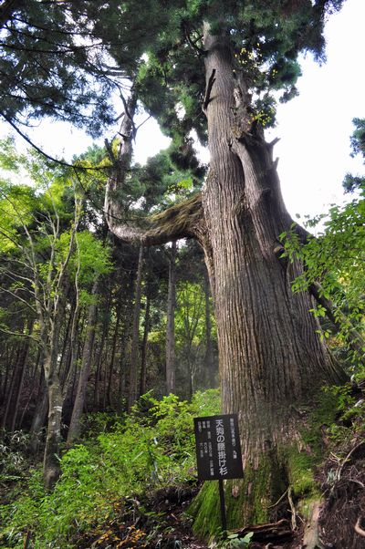 2010.11.3 御岳山 085