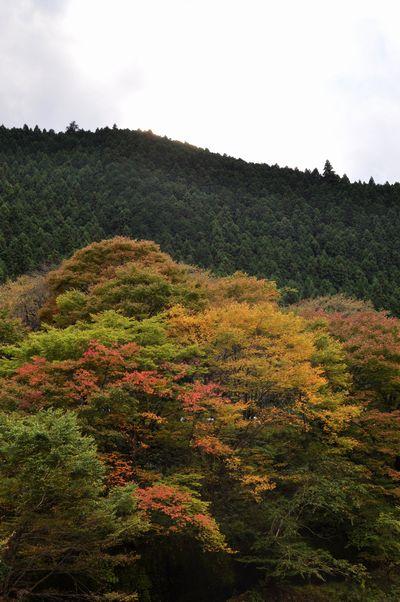 2010.11.3 御岳山 138