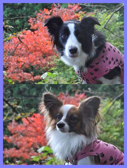 2010.11.3 御岳山 6