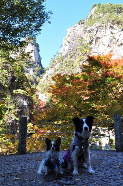 2010.11.11 昇仙峡 035
