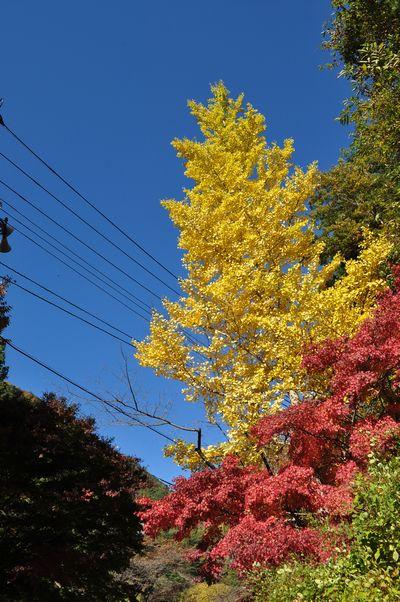 2010.11.11 昇仙峡 038