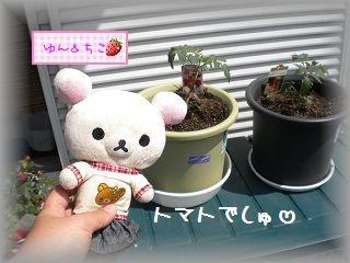 ちこちゃんの観察日記2011♪その1-2
