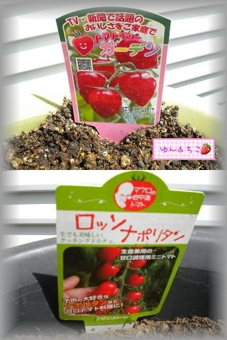 ちこちゃんの観察日記2011♪その1-3