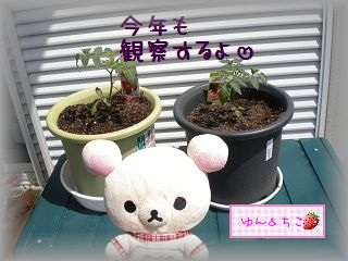 ちこちゃんの観察日記2011♪その1-4