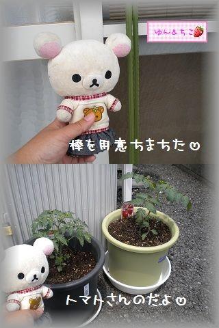 ちこちゃんの観察日記~2011その2~-2