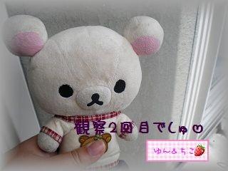 ちこちゃんの観察日記~2011その2~-1