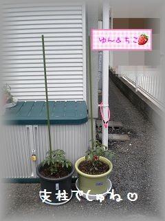 ちこちゃんの観察日記~2011その2~-3
