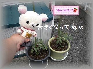 ちこちゃんの観察日記~2011その2~-4