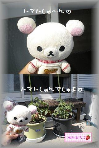 ちこちゃんの観察日記~2011その3~-2