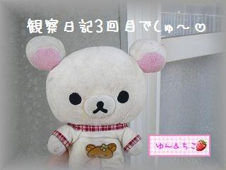 ちこちゃんの観察日記~2011その3~-1