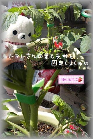 ちこちゃんの観察日記~2011その3~-4