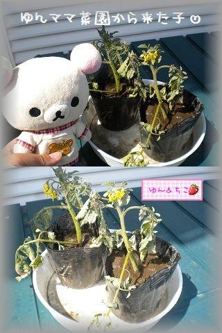 ちこちゃんの観察日記~2011その3~-6