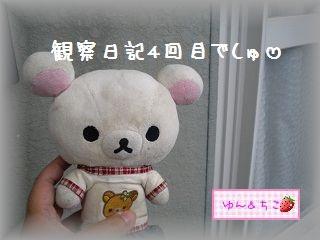 ちこちゃんの観察日記~2011その4~-1