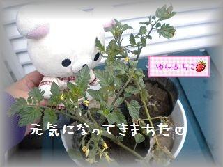 ちこちゃんの観察日記~2011その4~-4