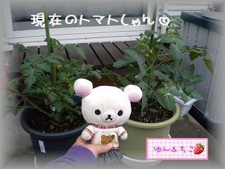 ちこちゃんの観察日記~2011その4~-2