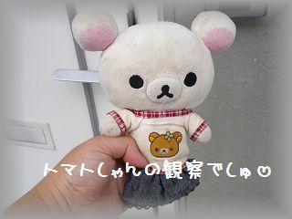ちこちゃんの観察日記2011★その5★-1