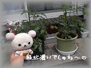 ちこちゃんの観察日記2011★その5★-2
